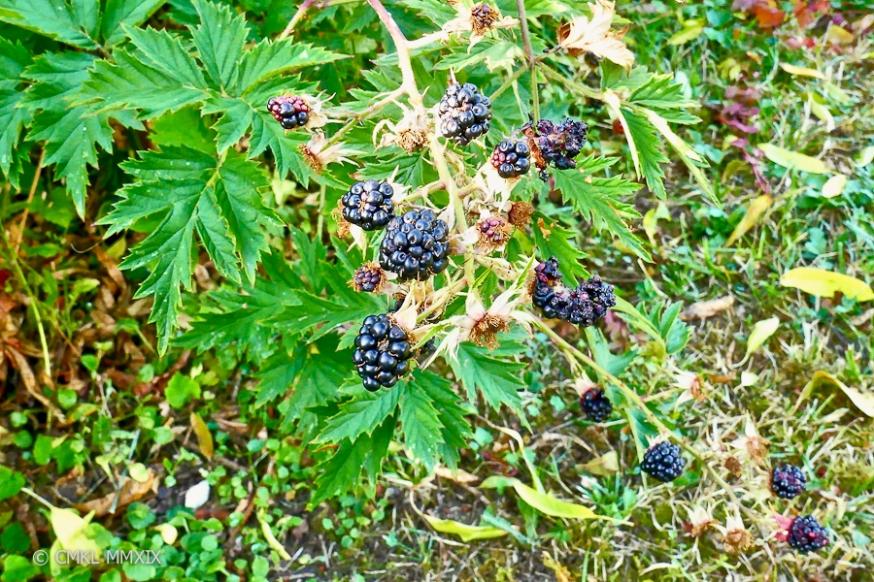 Jardin.August.10-1370077