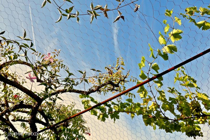 Jardin.August.11-1370076