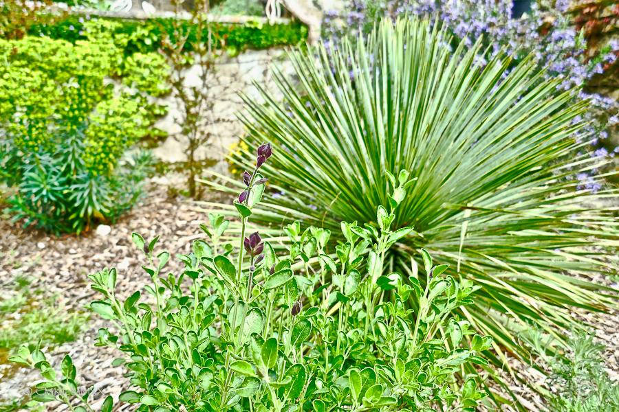 April.Garden.01-1410034