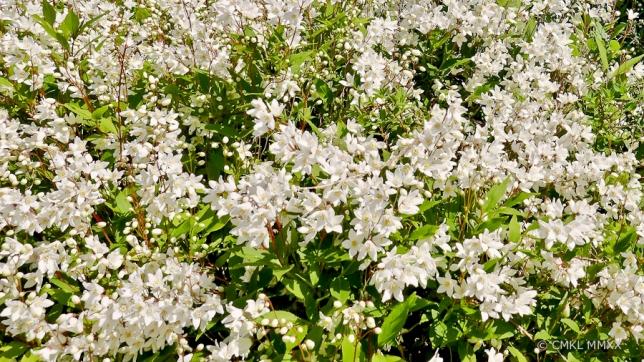 April.Garden.06-1410093