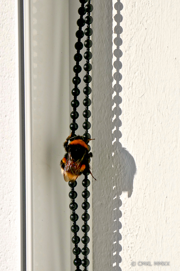 Bumblebee.02-1410054