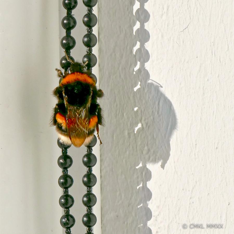 Bumblebee.03-1410056