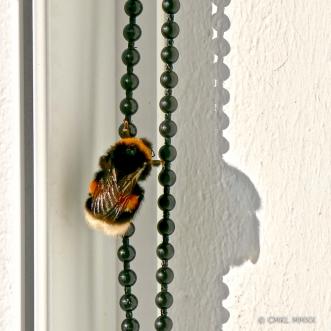 Bumblebee.04-1410059