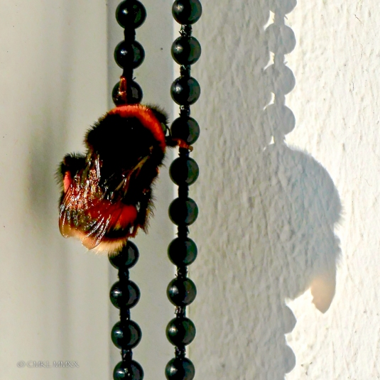 Bumblebee.06-1410062